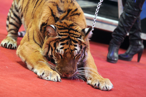 The Czech government has banned circuses with animals in the country