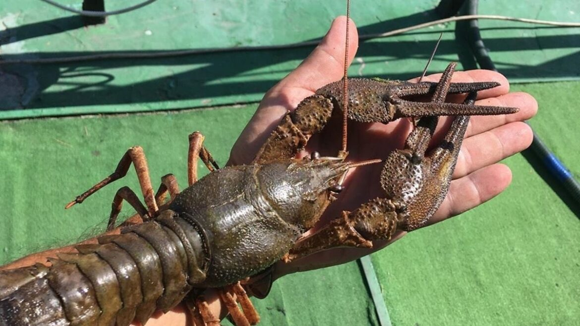 A cemetery in Antwerp has been captured by mutant crayfish