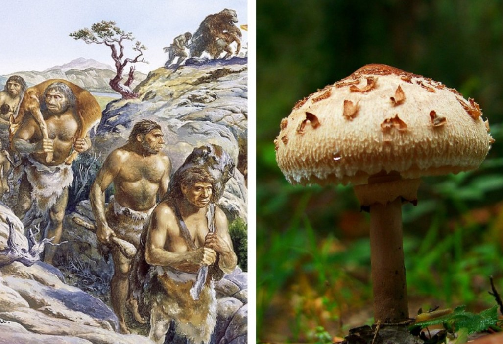 Scientists have assumed that people could have come from mushrooms